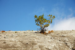 Tree among mountainous rocky plains Royalty Free Stock Photography