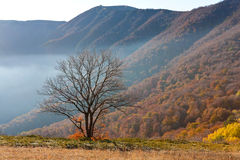 Tree in mountains Stock Image