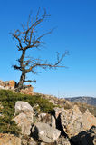 Tree in mountains. Lonely tree which grows highly in mountains Stock Photos