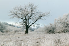 Winter tree in mountains covered with frost and ice Stock Image