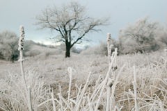 Tree in mountains covered with frost and ice Royalty Free Stock Photos