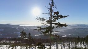 Tree Mountains Panorama Aerial 4k. 4k aerial of a winter landscape in Polish mountains stock video footage