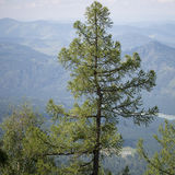 The tree in the mountains Stock Photos