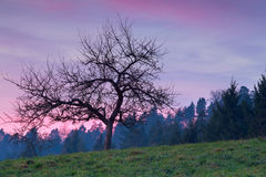 Tree in mountains at purple sunset Stock Photo