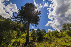 Tree in the mountains in the sun. Royalty Free Stock Photography