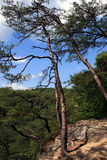 Tree on mountainside. Scenic view of tree on rocky mountainside with green forest and blue sky in background royalty free stock photography
