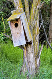 Tree mounted bird house Stock Image