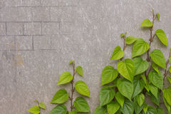 Tree mounted on a concrete wall Royalty Free Stock Photography