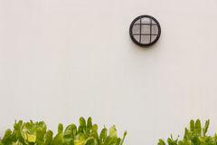 Tree mounted on a concrete wall in the pool. Stock Photography