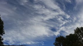 Tree with moving clouds in blue sky. Filmed in timelapse stock footage