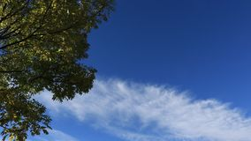 Tree with moving clouds in blue sky. Filmed in timelapse stock video footage
