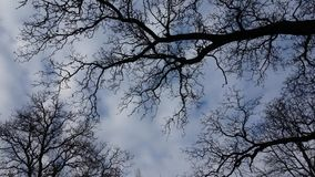 Tree and moving clouds. Still tree branches and moving clouds stock video