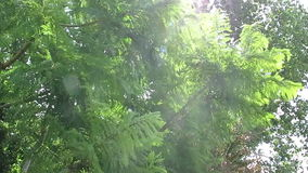 Tree moving with the wind stock video footage