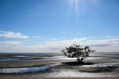 Tree on mudflats Stock Photos