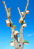 Tree with multiple bird houses Royalty Free Stock Images