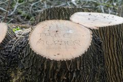 Tree Murder written on felled tree. A local has expressed displeasure with decision to cut down large deciduous tree in Bath, Somerset, UK Stock Image
