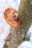 Tree mushroom Stock Image