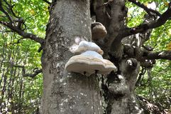Tree mushroom royalty free stock images