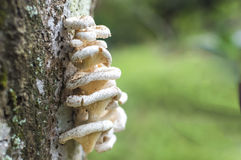Tree mushroom. With bokeh background Royalty Free Stock Image