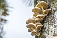 Tree mushroom. With bokeh background Stock Photos