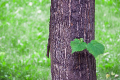 Tree with mustaches Stock Photography