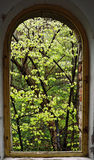 Tree from my window. Tree in front of my window - Herculane - Romania Stock Images