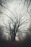 Tree in mysterious Halloween forest with fog Stock Photos