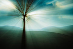 Tree in the mysterious land. Royalty Free Stock Images