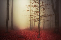Tree in mystic woods during autumn. Autumn mist in a romantic forest with red leaves on the ground Stock Image