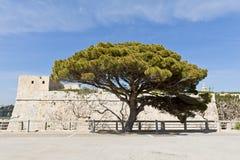 Tree nära stadsväggen av Mdina, Malta Arkivbild