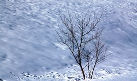 Tree with naked branches on snow Stock Photos