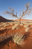 A tree in Namibia Stock Photo