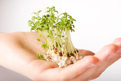 Tree natur finger hand human sprout Stock Photo