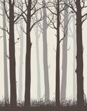 Tree Stock Photography