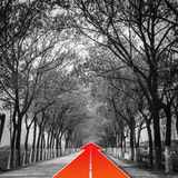 Tree natural tunnel on concrete road with red arrow Royalty Free Stock Photo
