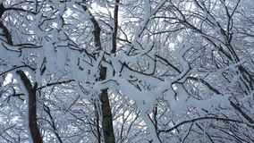 Tree, natural, winter, snow, cold, themes, evening Stock Photos