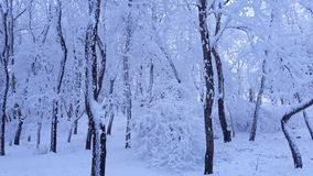 Tree, natural, winter, snow, cold, themes, evening Stock Photo
