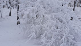Tree, natural, winter, snow, cold, themes, evening Royalty Free Stock Photo