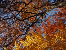 Tree, Nature, Autumn, Leaf stock image