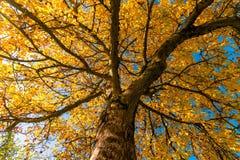 Tree, Nature, Branch, Autumn stock photo