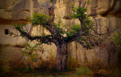 Tree  nature branch isolated design Royalty Free Stock Photography