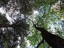 Tree, Nature, Branch, Leaf royalty free stock photos