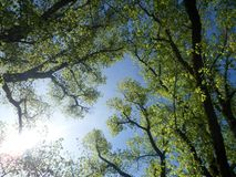 Tree, Nature, Branch, Vegetation royalty free stock image