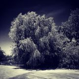 Tree. Nature in downtown Frisco, Texas Stock Photos