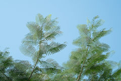 Tree. Nature green background wood sunlight forrest deciduous landscape summer  leaf park season environment foliage broadleaf branch branches spring leaves Stock Image