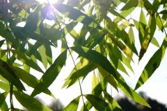 Tree. Nature green leaf perspective foliage Stock Image