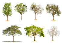 Tree nature of Isolated Royalty Free Stock Photo