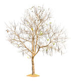 Tree nature of Isolated Stock Image