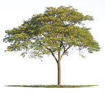 Tree nature of Isolated Stock Photography