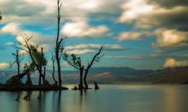 Tree. Nature lake cloud Royalty Free Stock Photos